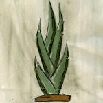 kaktus_small